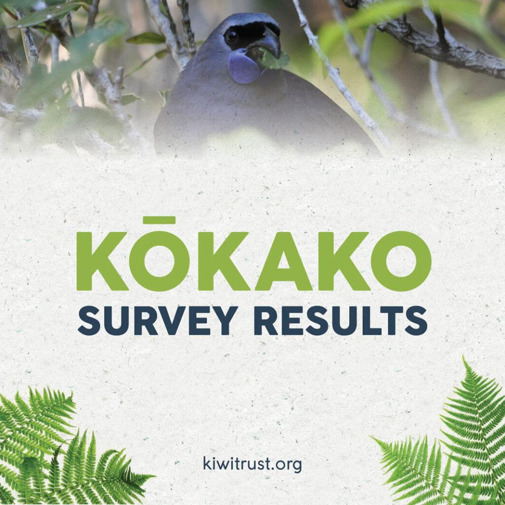 Kōkako survey results